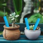 B2B Popisovacie štítky k rastlinám - modrá