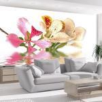 Fototapeta Tropické kvety - Tropical flowers - orchid tree (bauhinia)