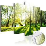 Obraz sýtozelený les na akrylátovom skle - Green Glade